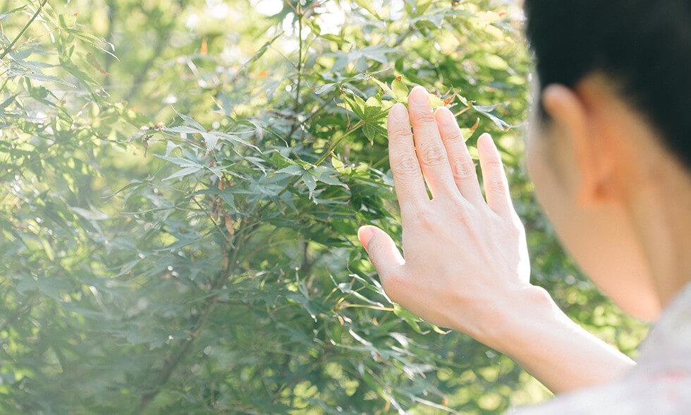 爪への椿油の塗り方